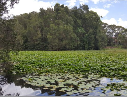 Coffs Harbour City Council – Part 5 Assessment of Spoonbill Lake