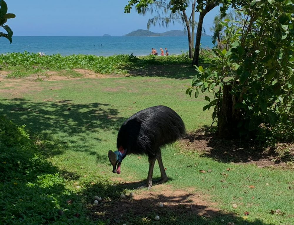 Close encounters of a cassowary kind…